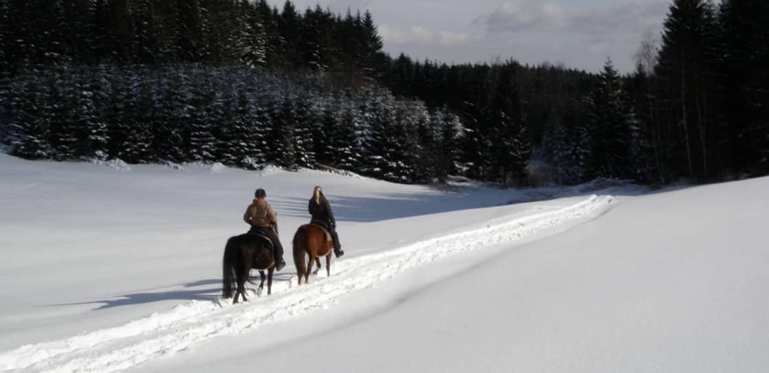 Reiten in der Südsteiermark im Winter