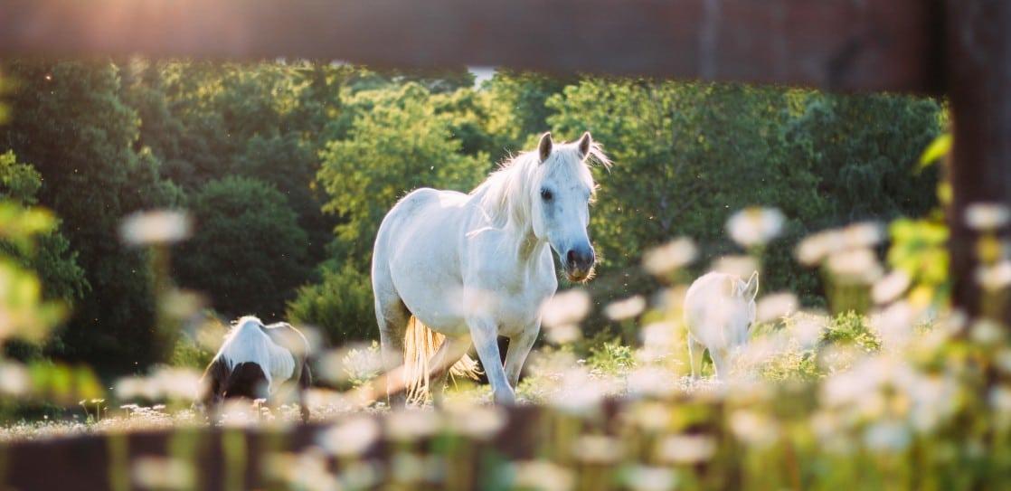 Pferdekoppel vor dem Chalet